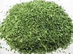 Parsley - Petroselinum crispum